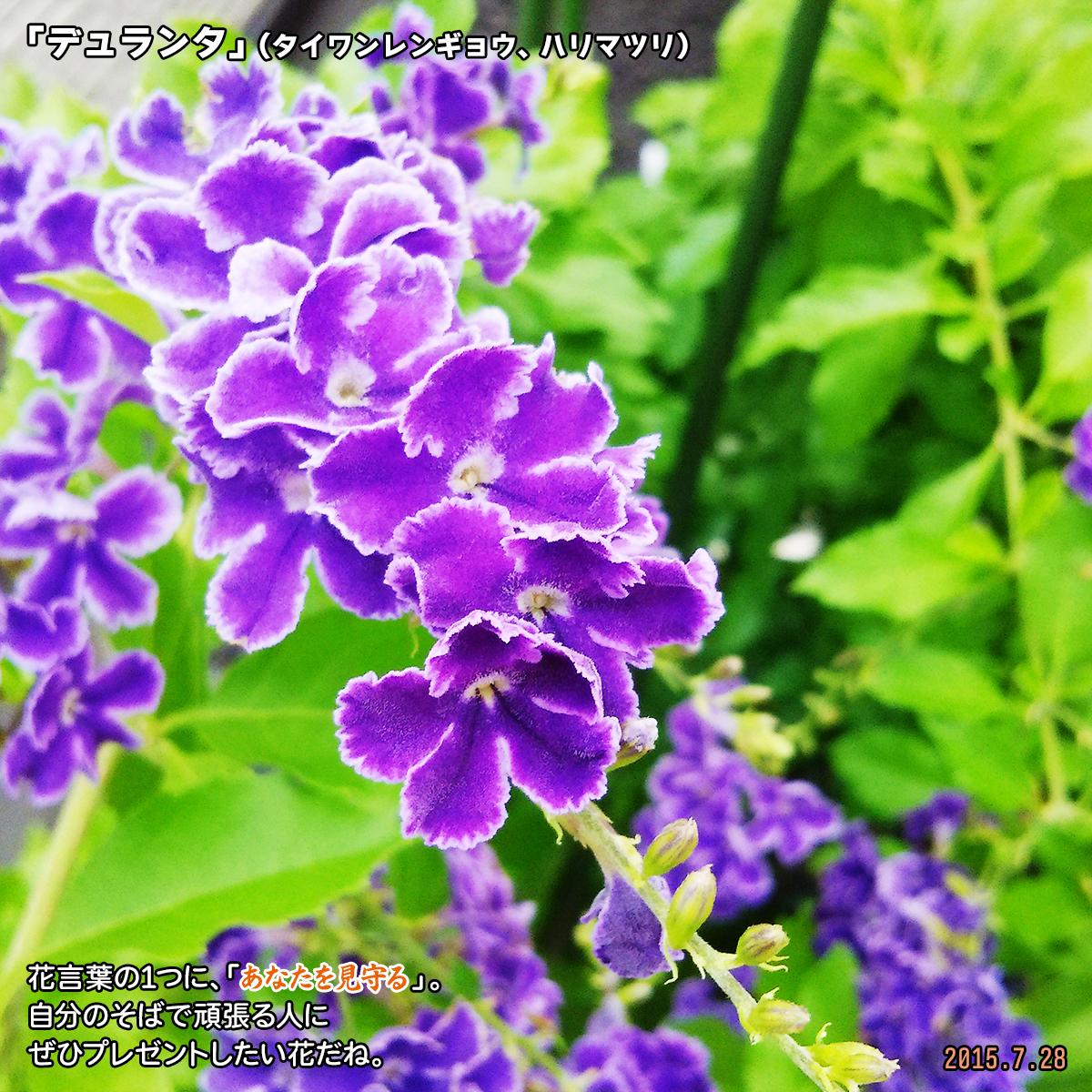DSC_0826_2020011219405011c.jpg
