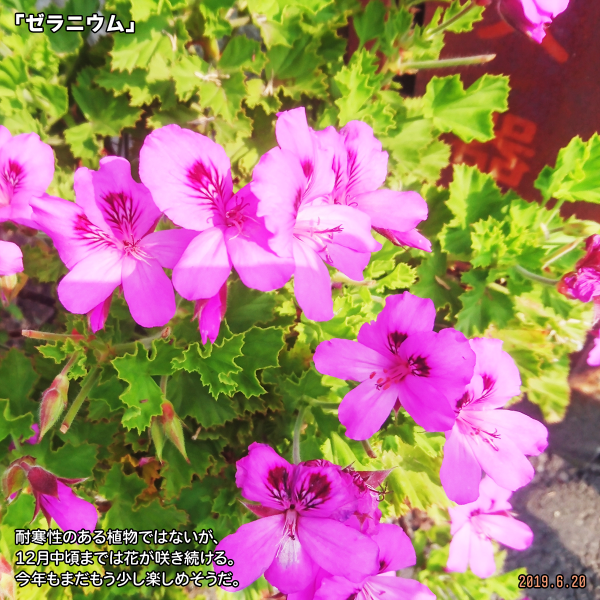 DSC_0834_2019120114195584e.jpg