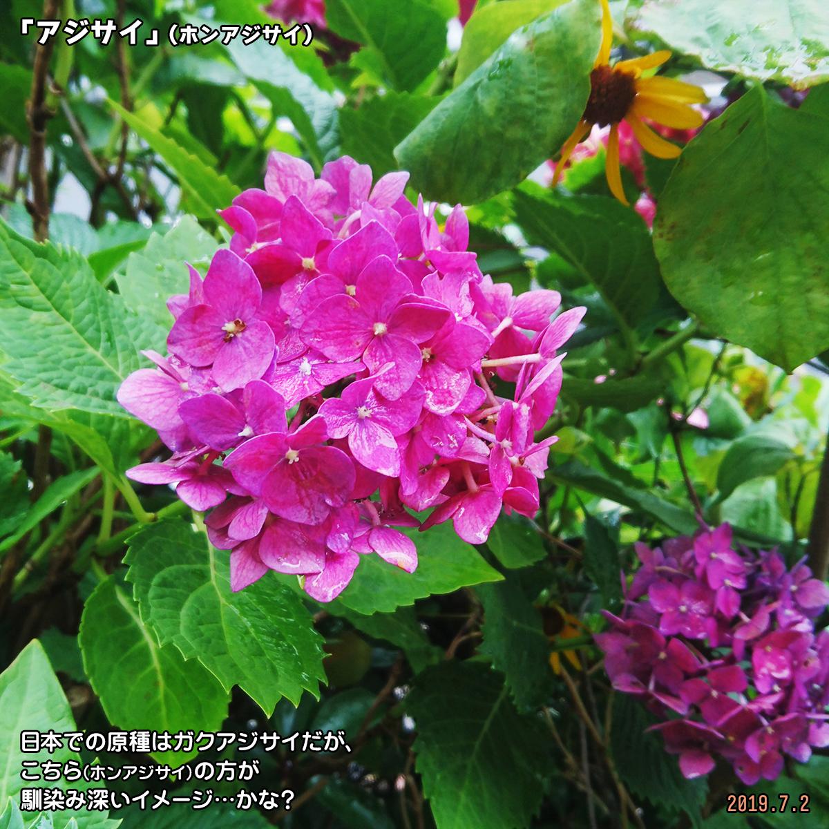 DSC_0903-(1)_20190924172948531.jpg