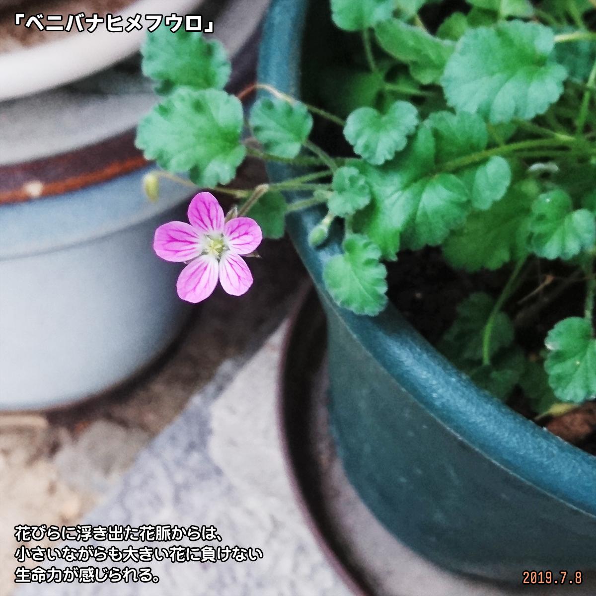 DSC_0939_20190909163647367.jpg