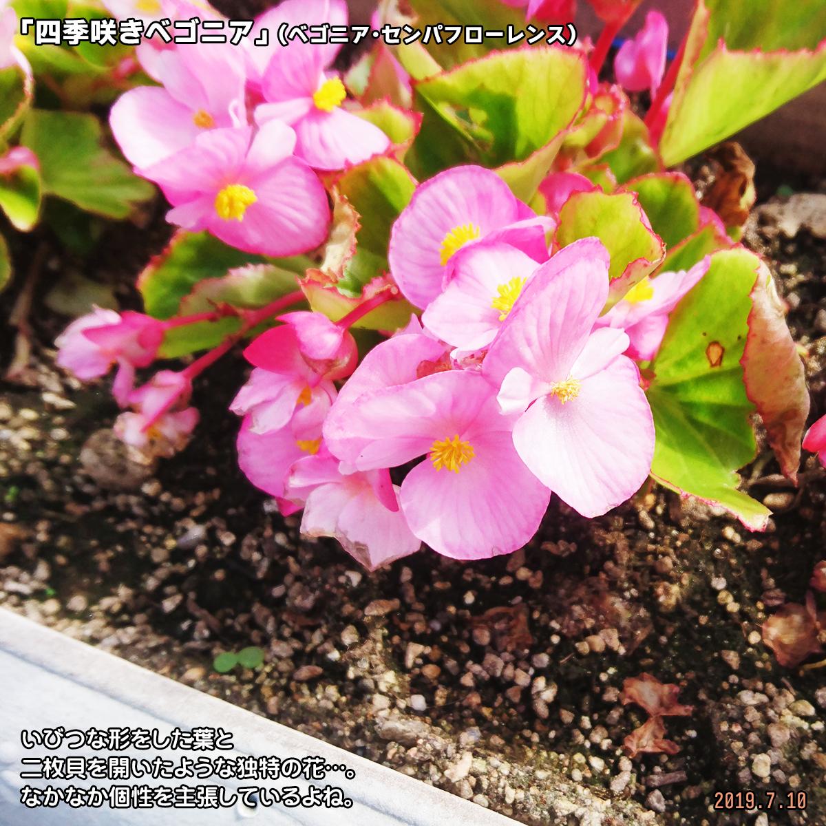 DSC_0947_20191018165617930.jpg