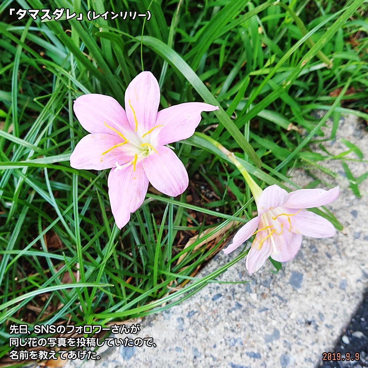 DSC_1351_2019110316120444b.jpg