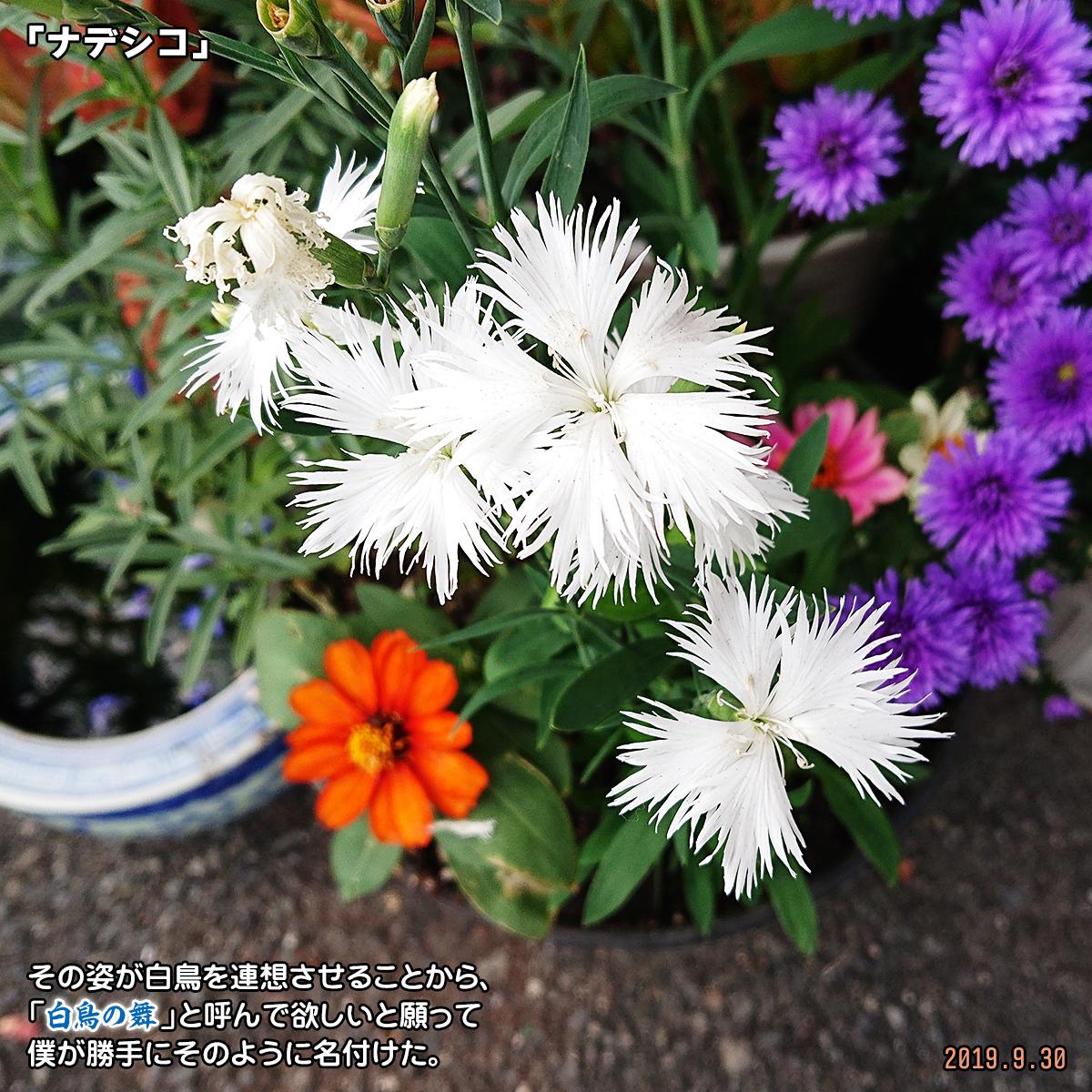 DSC_1511_20191031172650fa9.jpg