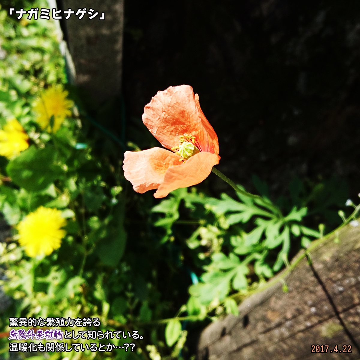 DSC_2022_20191221001122db0.jpg