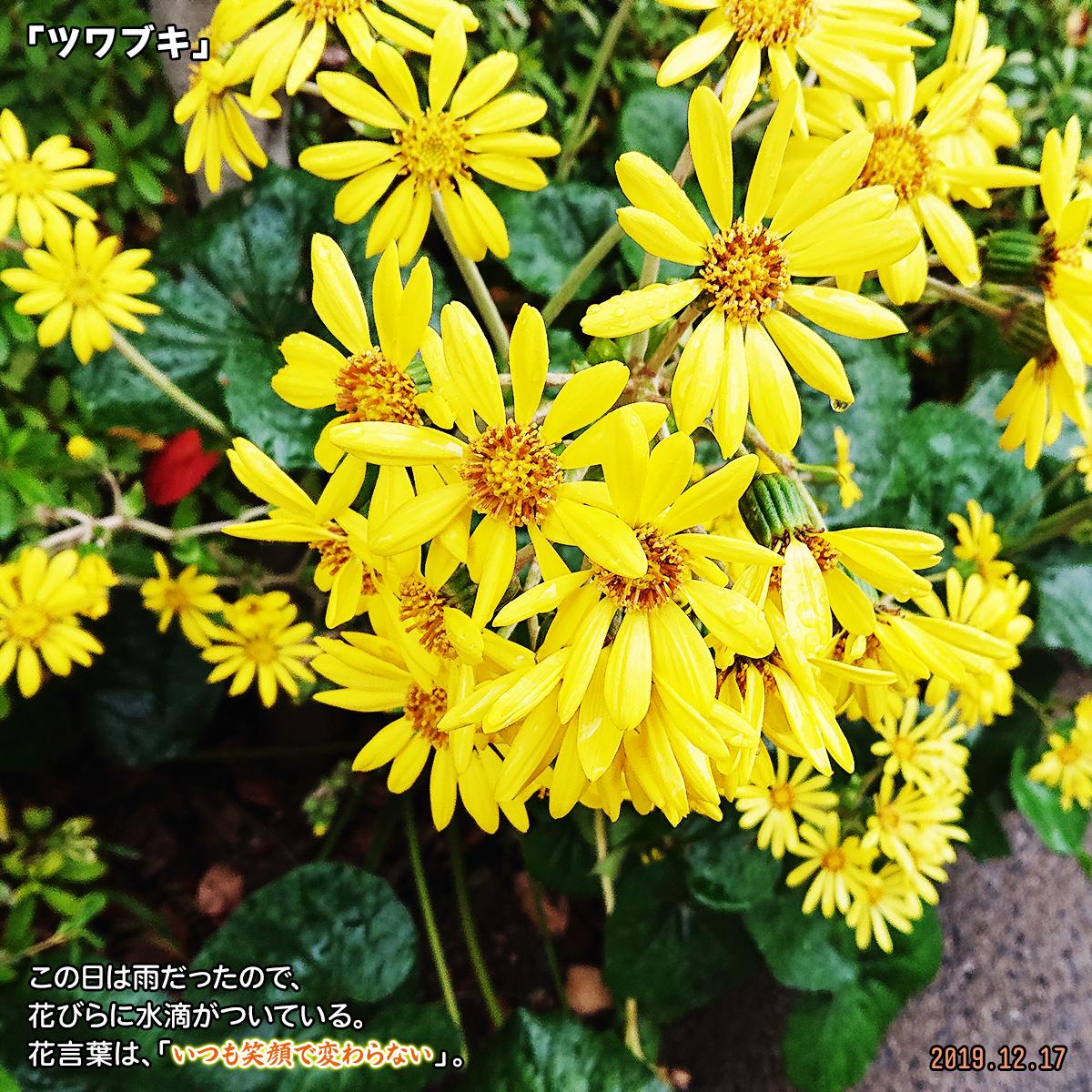 DSC_2140_2019122116162148d.jpg