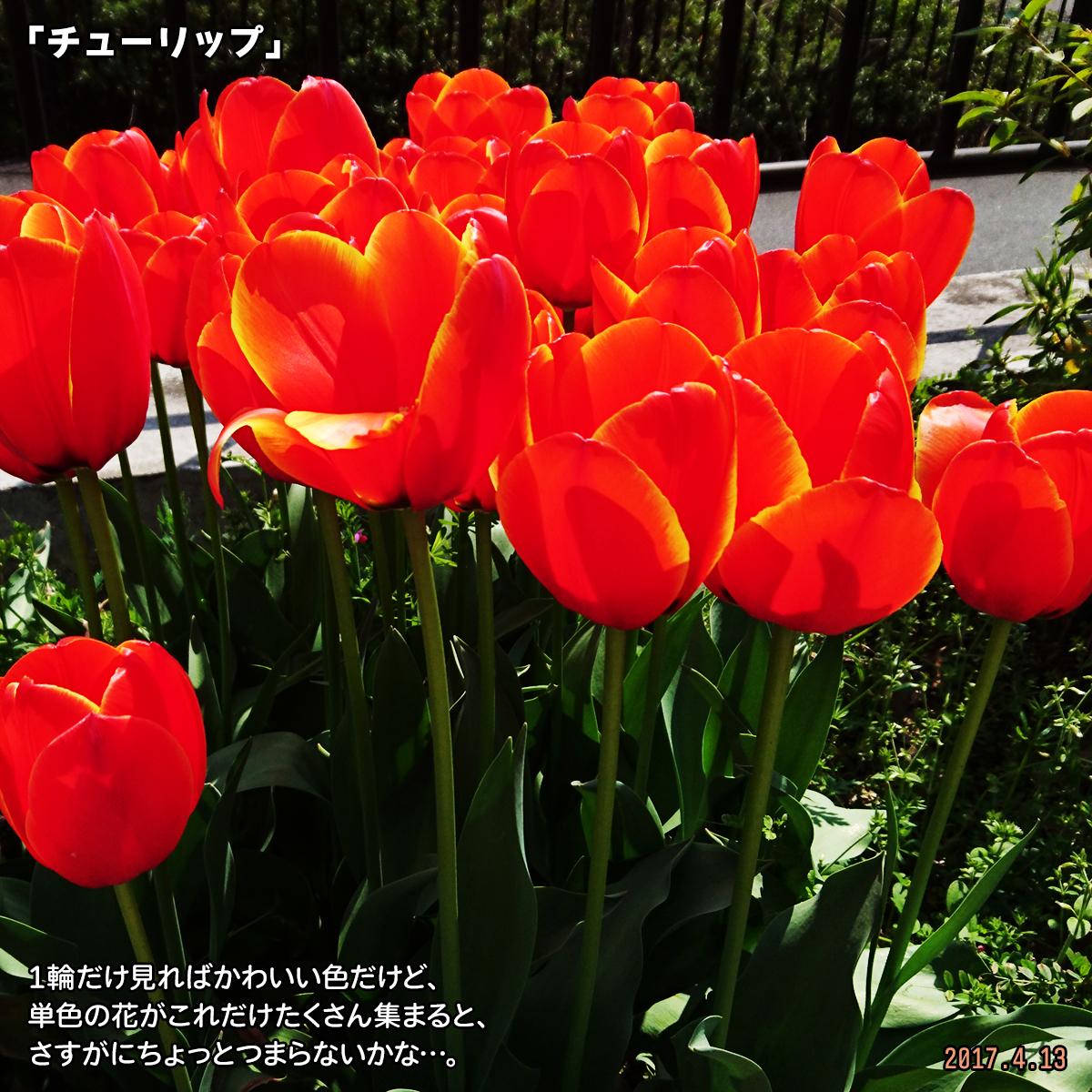 DSC_2625.jpg