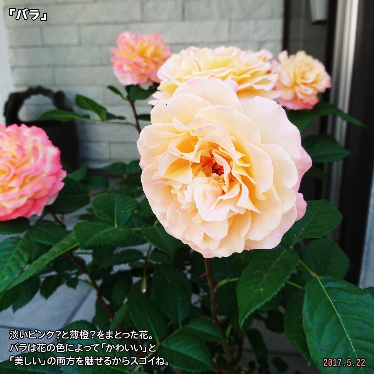 DSC_2657.jpg