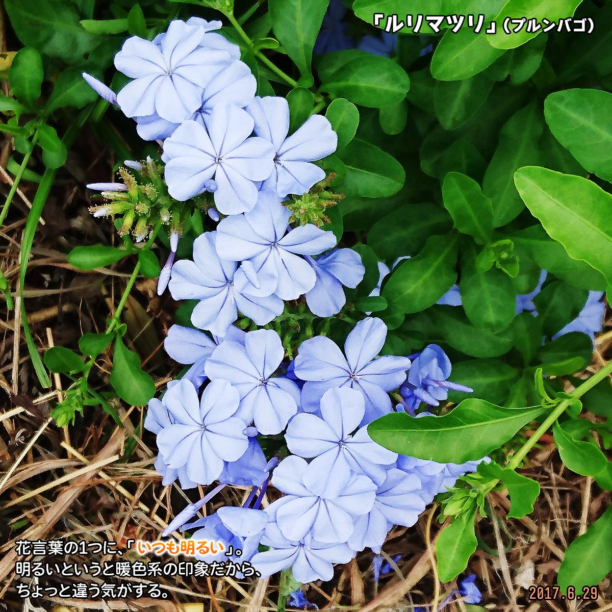 DSC_2989_202001131730572bf.jpg
