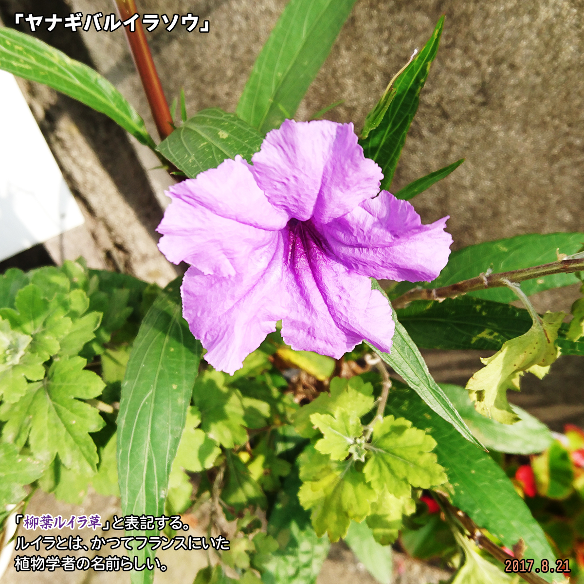 DSC_3594_20200114194138142.jpg