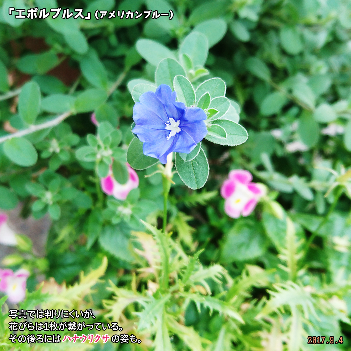 DSC_3747_2019121116470389a.jpg