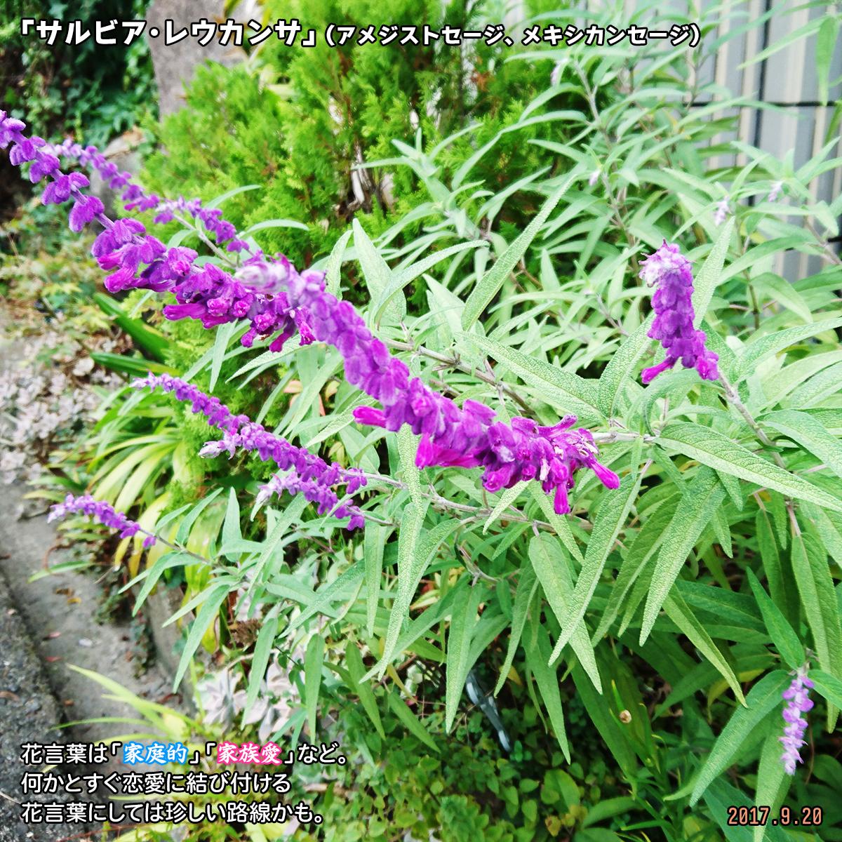 DSC_4021_201912261715377bf.jpg