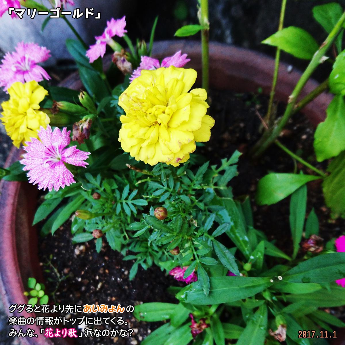 DSC_4761.jpg