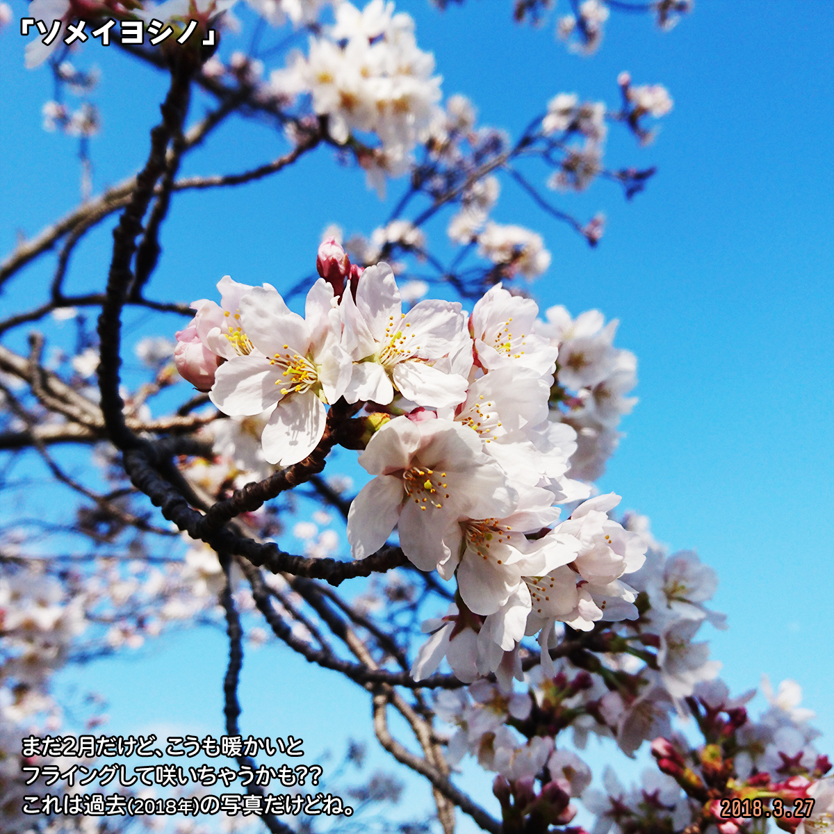 DSC_6358.jpg