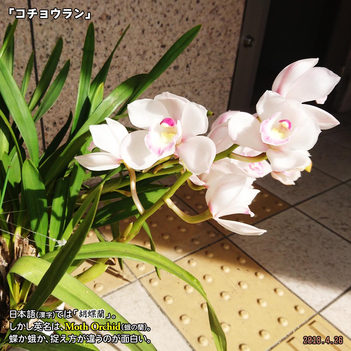 DSC_7169_20200311173215557.jpg
