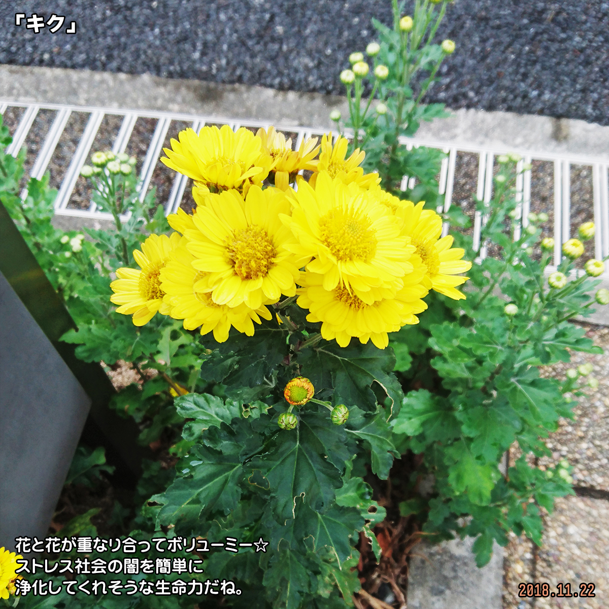DSC_8642.jpg
