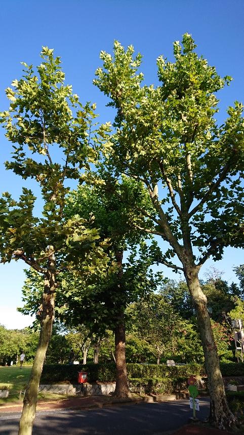 9月末の木立