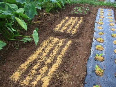 010928 春菊定植と種まき