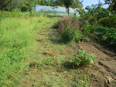011005草刈り1