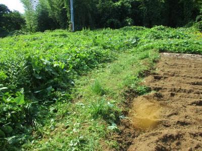 011005草刈り2