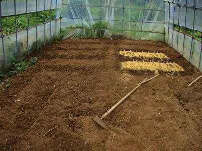 011007ハウスに種まき開始