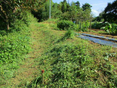 011005草刈り3