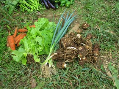 011011収穫した野菜1