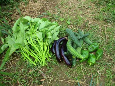 011011収穫した野菜2