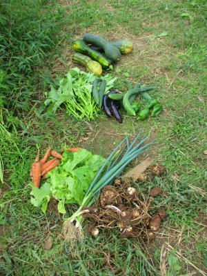 011011収穫した野菜4