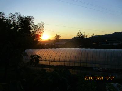 011028畑の夕暮れ