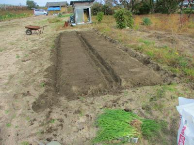 011117畝作り