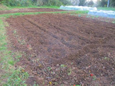 011124堆肥おきの後は耕運
