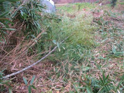 200119取り残しの丈も伐採