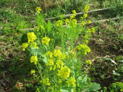 200126チーマティラバの花