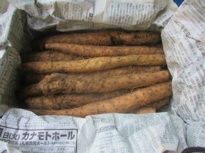 200126送られてきた自然薯