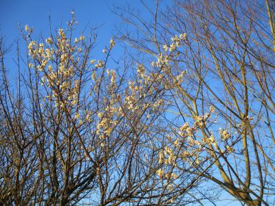 200209梅の花