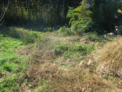 200211荒れた耕作放棄地1