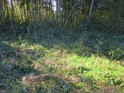 200211荒れた耕作放棄地3