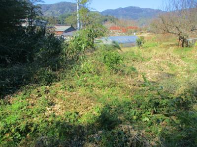200211荒れた耕作放棄地4