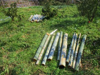 200224支柱用の竹切り