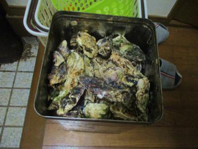 200226届いた牡蠣