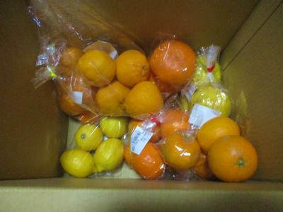 200317買った柑橘類