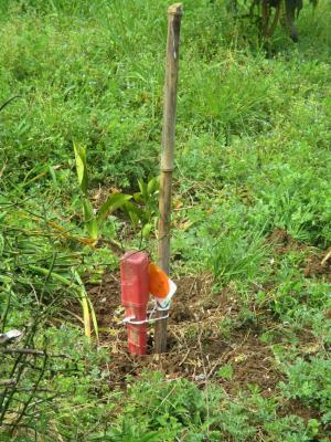 200328柑橘定植1