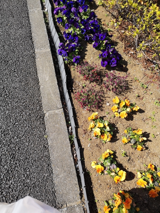 歩道のお花2