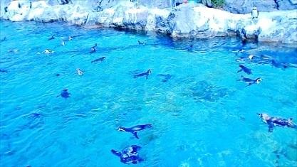 フンボルトペンギン 葛西臨海水族園 2019