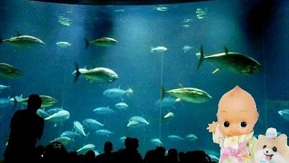 人がいっぱい 葛西臨海水族園 まぐろ