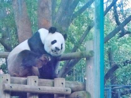 上野動物園 リーリー