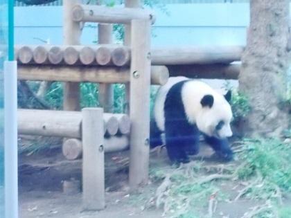 上野動物園 シャンシャン2