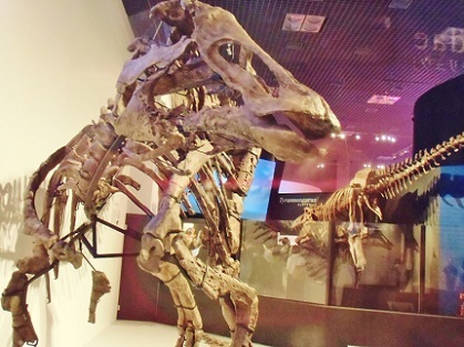 カムイサウルスの視線の先には