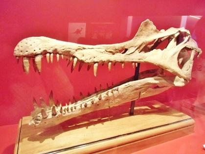 スピノサウルスの頭骨
