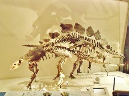 スコロサウルスとステゴサウルス